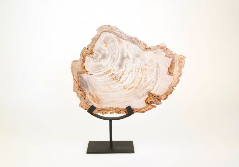 Large Petrified Wood Sculpture